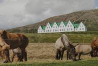 Stress helt af og lær indre ro. Deltag i Mindfulnessretreat i Island, se wiseonlife.dk