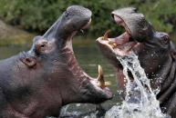 Safari i Sydafrika, Cape Town, Vinlandet og Garden Route - Nyati Safari